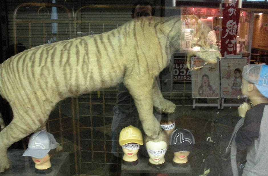 fake tiger in a window display in Kyoto